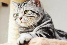 Kittenplanung